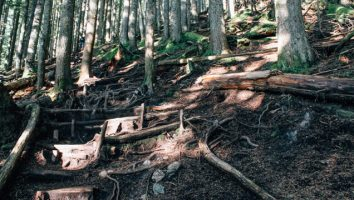 bcmc-trail